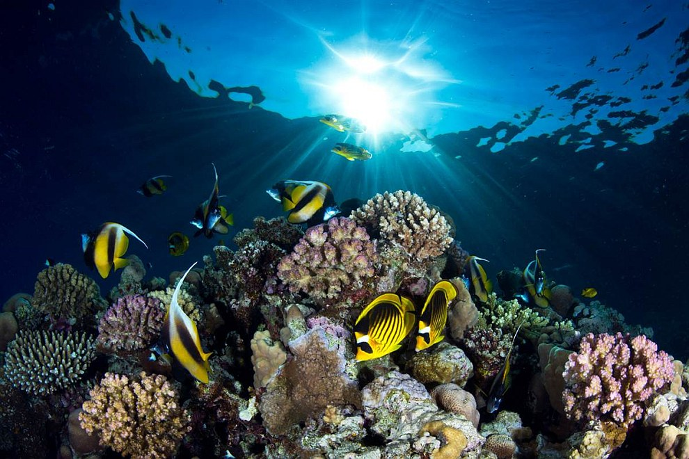 underwater_photography_7.jpg